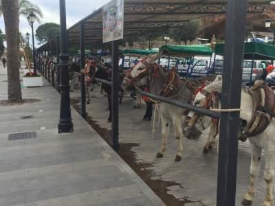 donkeys mijas